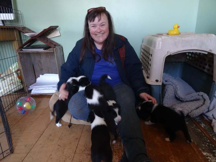 Christine and puppies 5 weeks