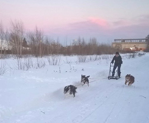 hele-mushing-1