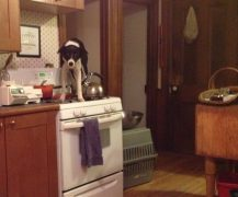 stove-top-puppy