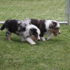 Sneak puppies